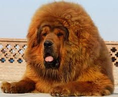World's Most Expensive Dog