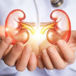 Best Food For Kidney Health